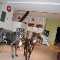 Dogs Indoors - Ruff Stuff Dog Hotel