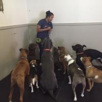 Vancouver Dog Daycare