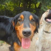 Dog-closer-ruff-stuff-dog-services