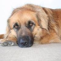 Fozzy-Resident-Dog
