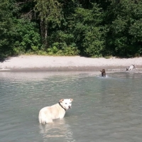 Honey-Squamish-River