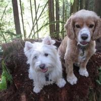 Jasper & Gus