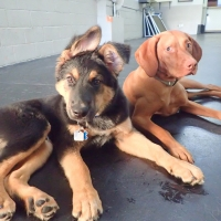 Lou-and-Dela-Ruff-Stuff-Vancouver-Dog-Daycare-min