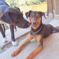 dogs-outside-ruff-stuff-dog-services