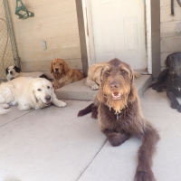 group-of-dogs-ruff-stuff-dog-services