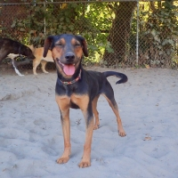Dog-playing-ruff-stuff-dog-services