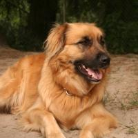 Fozzy2-Resident-dog