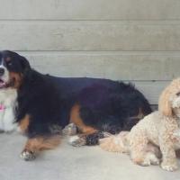 big-dog-ruff-stuff-dog-services