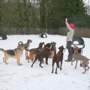 Ruff Stuff Dog Boarding Services - Vancouver Dog hotel and doggie daycare with dog walking services.