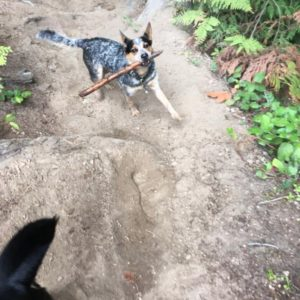 Dog walking vancouver, Ruff Stuff Dog Walking, vancouver's best dog walking services.