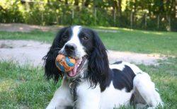 Dog with a ball Ruff Stuff Dog Daycare walking and Boarding