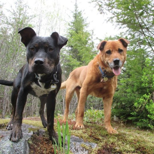 Vancouver dog walking trail in Squamish Ruff Stuff Dog Daycare walking and Boarding