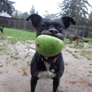 Dog boarding services in vancouver - Ruff Stuff Dog Services, Vancouver's best dog boarding.