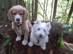 Dog boarding and daycare in Vancouver and Squamish - Ruff Stuff Dogs sitting on a log in a forest