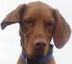 Coco Ruff Stuff Dog Daycare walking and Boarding