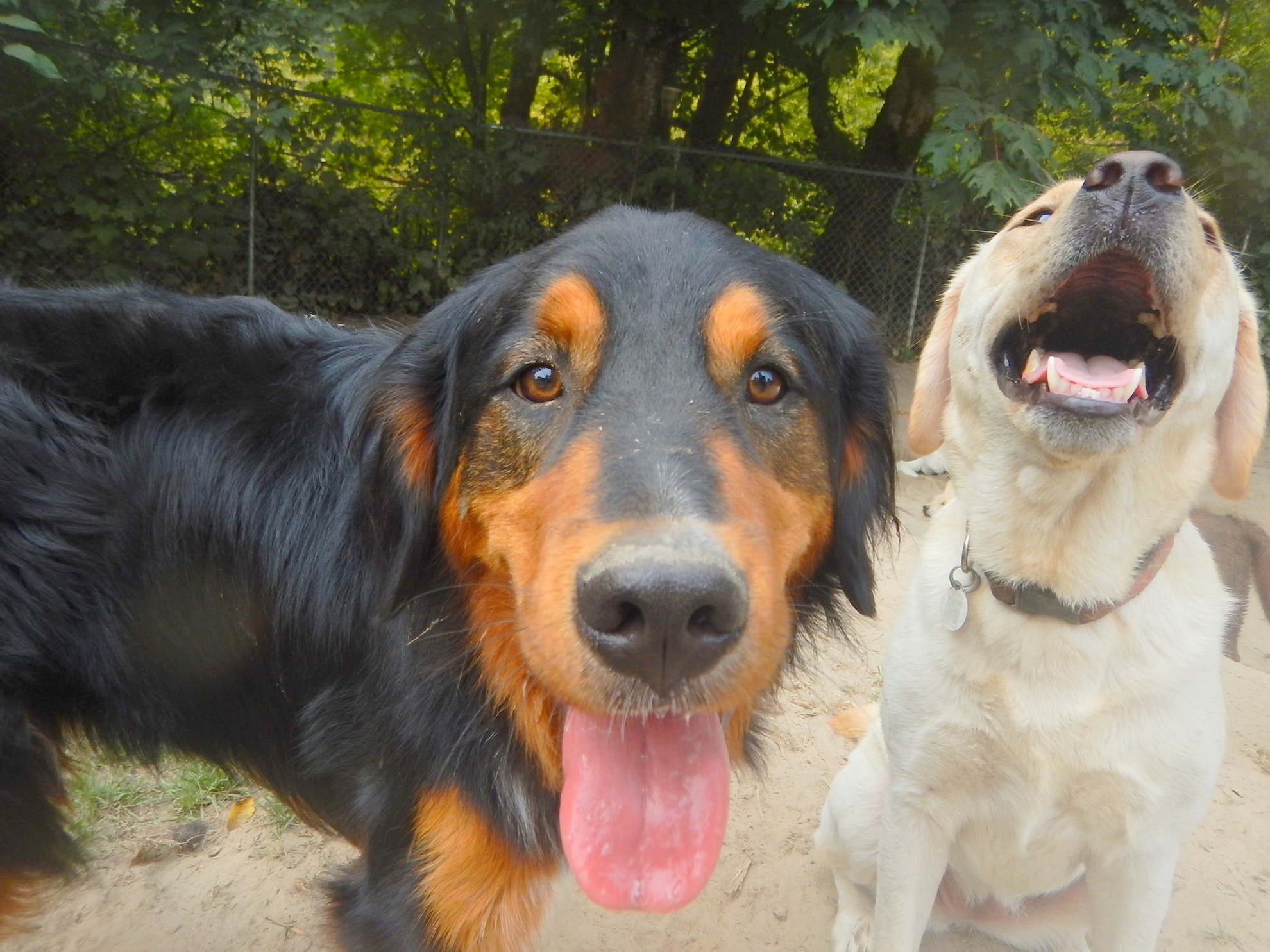 Dog closer Ruff Stuff Dog Daycare walking and Boarding doggy daycare vancouver
