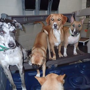 Group in Vancouver Ruff Stuff Dog Daycare walking and Boarding