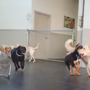Ruff Stuff Vancouver Dog Daycare Play-min
