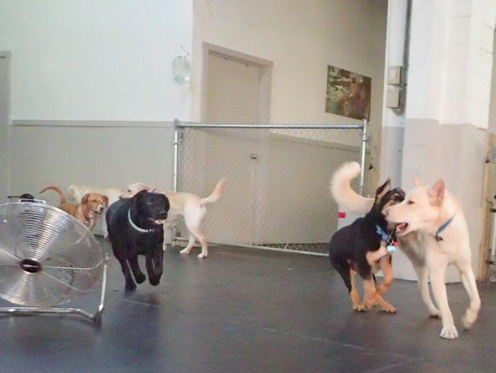 Ruff Stuff Dog Services