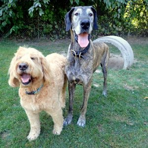 Portrait dogs Ruff Stuff Dog Daycare walking and Boarding doggy daycare vancouver squamish