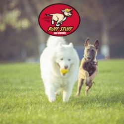 Dog running together - banner ruff stuff Dog Daycare walking doggy daycare dog walking whistler